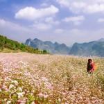 Cao nguyên đá mùa hoa nở
